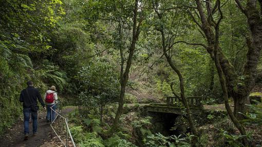 Levada dos Balções, una de las múltiples sendas que recorren los bosques de Madeira