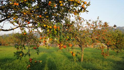 Pomarada en la Comarca de la Sidra