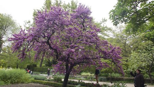 Real Jardín Botánico, en Madrid