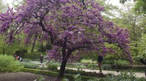 Diez maravillosos jardines de España donde celebrar la primavera
