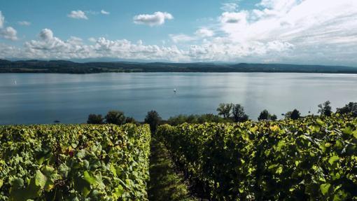 Lago de Murten desde las colinas del Monte Vully