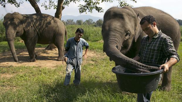 Dos de los elefantes que «trabajan» para Blake Dinkin, el emprendedor canadiense fundador de Black Ivory
