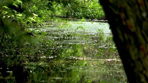 Nacimiento del río Abión en Almenar