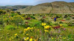 Cómo el desierto más árido del mundo se convierte en un vergel