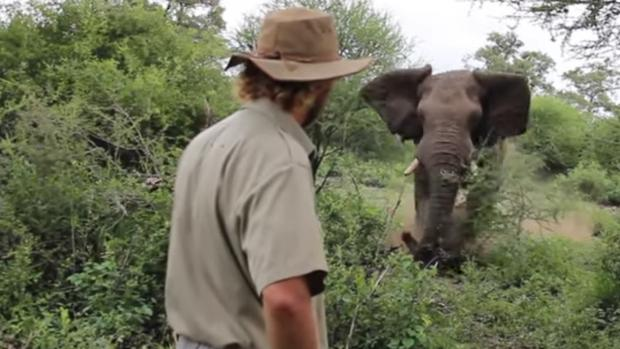Alan McSmith delante de un elefante en plena embestida del animal