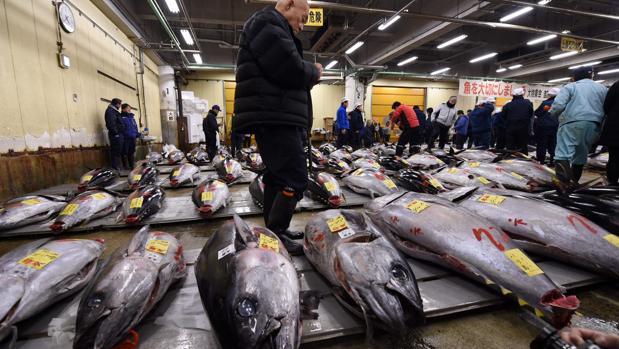 Mercado de pescado de Tsukiji, el más grande del mundo, en Tokio