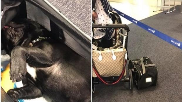 Imágenes del perro colgadas en Facebook por una pasajera del vuelo de United, A la derecha, la bolsa en la que viajaba el animal